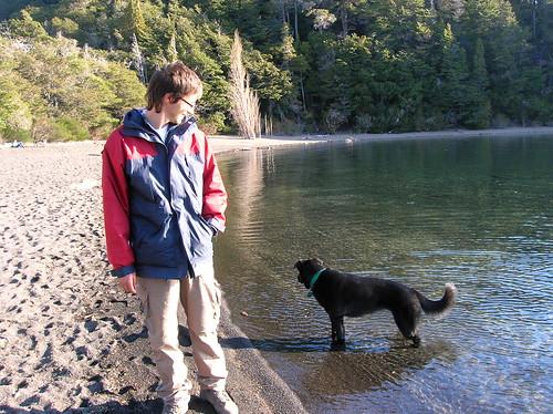 perro vago en el lago