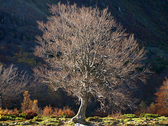 Haya en la Veiga (jtsoft) Tags: landscape asturias olympus cordilleracantbrica e510 ubia quirs pearueda zd1442mm parquenaturalubiaslamesa jtsoftorg