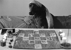 fortune teller (saikiishiki) Tags: blue portrait dog white black love film k analog darkroom grey asahi pentax k1000 bokeh gray weimaraner analogue fortuneteller  1000  weim greyghost bwfilm tarotcards  squidoo blueweimaraner weimie rolyn weimaranerart  bwphotogragh handdevelopedfilm handdevelopedbwprint handdevelopedbwphotograph handdevelopednegative waimarana blueweim weimaranerartist weimaranerphotography weimaranerphotographer saikiishiki