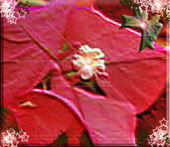 RED AND GREEN FLOWER WRAPPING (fantartsy JJ *2013 year of LOVE!*) Tags: christmas camera friends red green floral colors photoshop canon wrapping lights 3d embossed blueribbon aclass fpc awesomeshot holidaymagic athousandwords lifeasiseeit flickrsbest passionphotography mywinners mywinner abigfave thebeholder anawesomeshot worldwidephotographers eyeof amazingshots diamondclassphotographer top20red ysplix flickrelite focuslegacy goldsealofquality top20everlasting perfectphotographer photosthatrock goldstaraward uniqueandcreative top20vivid clevercreativecaptures hohoholidays