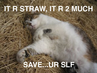 strawcat is overcome