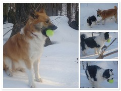 Tennis Ball Obsession