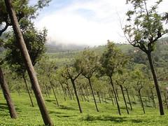 coonoor view , the nilgiri