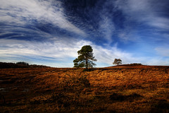 JUST TWO (Dani Balkanska) Tags: trees two fab bec soe newforest boulevardofbrokendreams diamondclassphotographer danroka ineednewexplore thisoneisbroken whatphotographer itsemptyhere nobodysplace itsnotaboutthephotographer wheredidyouseeonehere