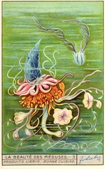 meduse 3