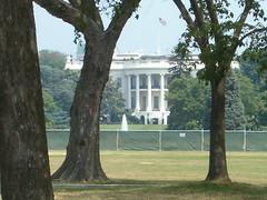 whitehouse-trees-close