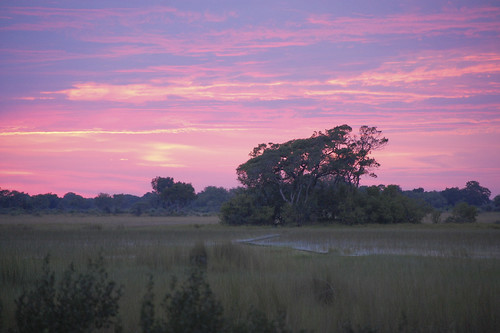 sunrise in the Okavango delta-2