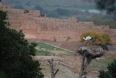 DSC_0263.JPG (tenguins) Tags: africa bird ruins nest arabic morocco berber perch stork rabat chelle siteseeing chella romanruins