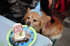 Rusty's 8th Birthday