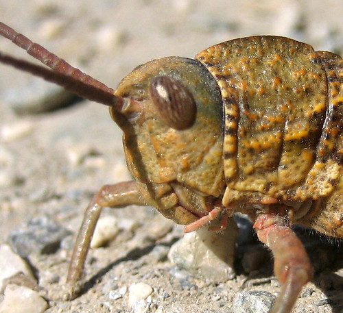 Bug on track