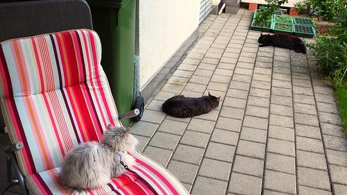 Fluffy, Tabby & Nera relaxing