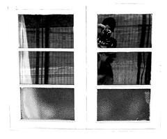 (Felipe Smides) Tags: chile art me window ventana arte yo s felipe bersuit curacavi artisticexpression instantfave i mywinners abigfave aplusphoto beatifulcapture artlegacy smides fotografiasmides funfanphotos felipesmides