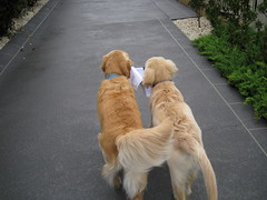 Bringing in the mail
