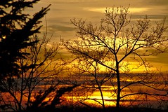Sunset (G. Lang) Tags: bäume sonnenuntergang äste sonyilce7m2 sunset sonyalpha7ii sonya7ii trees branches coucherdusoleil arbres