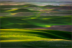 Palouse Green#2 (Chip Phillips) Tags: sunset green landscape photography washington spring butte searchthebest state northwest wheat farming phillips grain hills chip agriculture inland rolling palouse steptoe