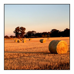 Hay Bale Sunset (heritagefutures) Tags: autumn light sunset copyright orange photo lowlight low farming australia victoria farms rolls hay hr agriculture bales dirk allrightsreserved shepparton stubble haybales cosgrove pinelodge spennemann australianfarming manontheland heritagefutures dirkhrspennemann heritagefuturesallrightsreserved copyrightdirkhrspennemann ausphoto