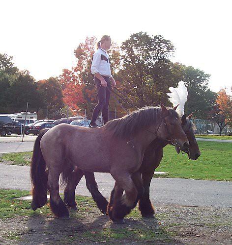 Horse Stunt Man