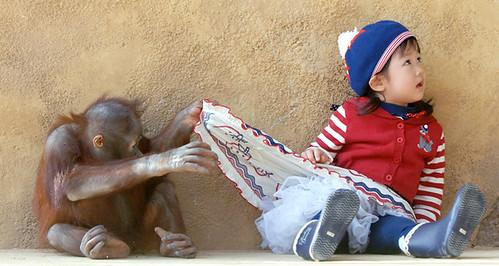 Upskirt Orangutan