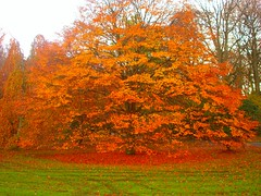 Autumn Colors (kezwan) Tags: autumn color nature beautiful gteborg sweden sony sverige 1on1 botaniskatrdgrd dscw5 kezwan 2on2 brillianteyejewel