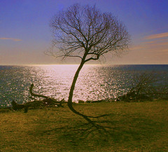 Lonely Tree (marty_pinker) Tags: ontario tree lakeontario mississauga polaris takeabow supershot saddingtonpark abigfave diamondclassphotographer flickrphotoaward