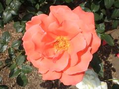 P4290069.JPG (Gail Chris Spinks) Tags: florafauna