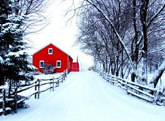 A Winter Entrance (star_cosmos_bleu) Tags: road christmas trees winter red snow colors barn fence postcard entrance aclass blueribbonwinner golddragon beautifulcapture flickrgold impressedbeauty aplusphoto agradephoto ultimateshot betterthangood theperfectphotographer flickrlegend dragongold