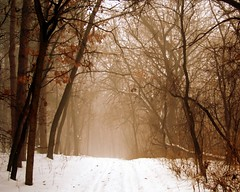 solace (dan [durango99]) Tags: christmas winter mist snow cold fog landscape path trail melancholy a100 solace theunforgettablepictures phlow:emote=away phlow:status=away merrychristmasdearfriend reverieart
