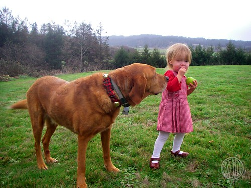 Red Dog wants a taste
