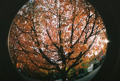 2222joa-R2-039-18 (rudie11) Tags: autumn red orange fall oregon portland lomography nw or pdx falltrees colorchange fisheye2