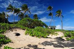 Hava (Windward Coast) Makapu'u Beach Park 178 (Arnaldo (Interata)) Tags: makapuubeachpark halonablowhole makapuubeach makapuulookout