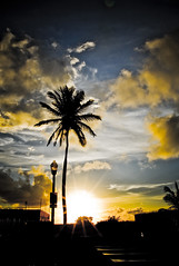 Good Morning SoBe (eyecbeauty) Tags: morning blue sky sun yellow clouds sunrise shadows palm miamibeach southbeach skyblue sobe goldenglobe worksofart aplusphoto excapture naturessilhouettes canonef163528liiusm thebestpicturegallery showmeyourqualitypixels qualitypixels favtop35