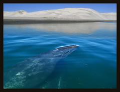 mexico the whales (janeau) Tags: mexico whales guerreronegro platinumphoto lagunaojodelevre capturenature