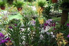 Berjenis-jenis orkid