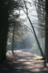 11 February 2008 (Copperhobnob) Tags: trees light colour texture woodland landscape scotland shadows aberdeenshire february aden adenpark hpad scerenescene