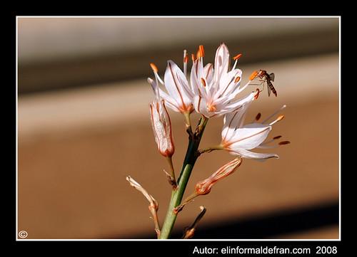 Flor y mosca