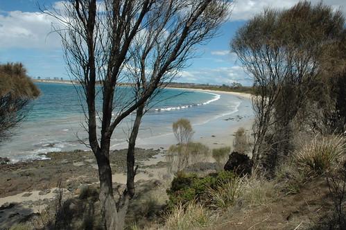 Tasmanian landscape
