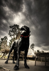 The Sock Slayer (blakelipthratt) Tags: sky cloud dog house storm black tree home yard umbrella photoshop canon ga georgia chair backyard sock lab labrador sigma brunswick patio collar 1020 hdr photomatix xti