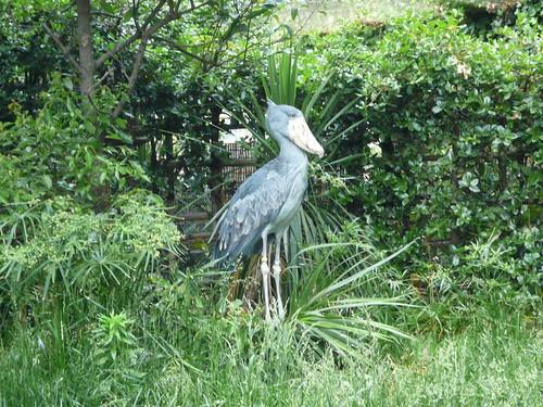 上野:上野動物園06