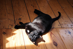 sun bathin' (jana shea) Tags: cat kitty kleinepoes