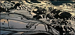 sunrise (travelben) Tags: terraced richfield water yuanyang yunnan china color sunrise chine rizière terrace rice field chinese curve line graphic abstract nature mirror ligne terrasse reflection terraces sky outdoor light farm dreamscape asia agriculture asie ricefield morning reflet lines pattie worldheritage hani minority matin paysage campagne countryside landscape dawn early h2o irrigation frame is excellent give image