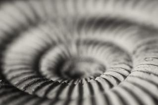 I love ammonites