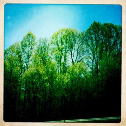 atlanta-treeline