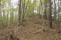 高畑山の登り道