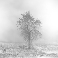 What Is Winter? (Vincnt) Tags: autumn winter tree 6x6 fog zeiss hasselblad squareformat czechrepublic firstsnow chill blancinegre vincentvega naturesfinest 503cw fujineopanacros100 monochromia ilfordrapidfixer topofthefog nikonsupercoolscan9000ed vincnt planarcf8028t adoublefave ilfordilsols