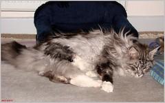 platsch - Maxwell ist vom Sofa gefallen