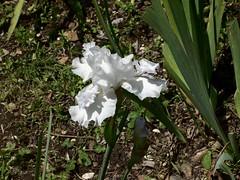 ortobotanico 178 (blum1) Tags: alberi fiori piante ortobotanico