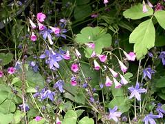 ortobotanico 359 (blum1) Tags: alberi fiori piante ortobotanico
