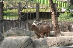 2007國旅卡DAY4(壽山動物園)034