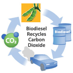 cycle biodiesel