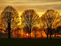 Avenue Sunset (algo) Tags: sunset trees avenue algo halton england sun bravo 200750plusfaves topf50 topv111 magicdonkey artlibre topv333 topf100 topv999 topv1111 811 topf200 topv2222 topf300 gold orange black light clouds cloud sky brown photography 50f 100f 200f 300f